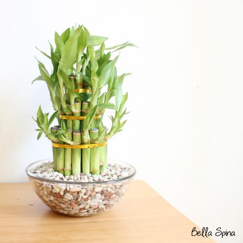 Vas Tanaman bambu rejeki hoki + batu hias multicolor HB-04