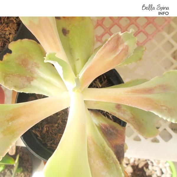 Tips Menjemur Kaktus dengan Baik By Bella Spina| Bella Spina Indoorplant Store
