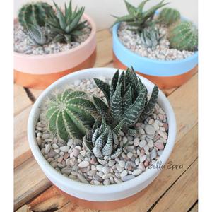 Kaktus Terrarium Bowl Warna Copper KT-23